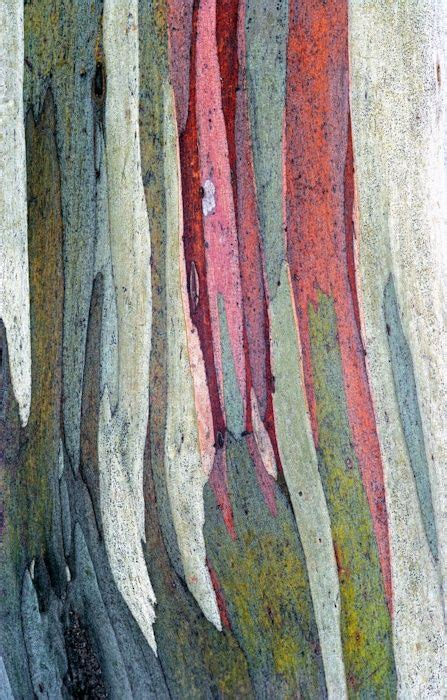 bark color loving this color palette of the bark of a rainbow gum
