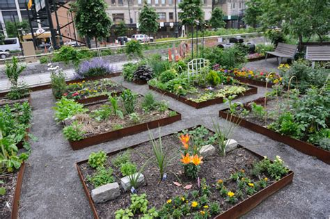 community garden takes root again downtown express