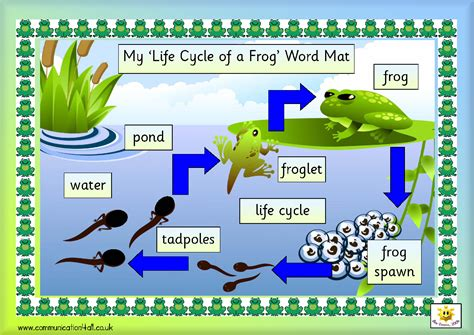 Frog Cycle by Illuminations Frog