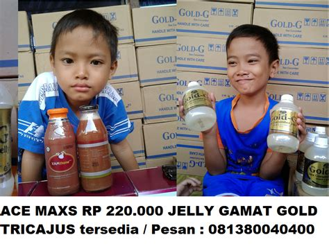 Ace Maxs Jakarta Selatan jelly gamat murah yuliani hp 081380040333 jelly gamat gold g jakarta selatan murah kebayoran