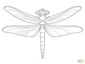 dragonfly coloring pages dragonfly coloring page free printable coloring pages
