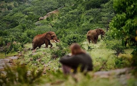 A Marvelous Take On The Safari Look With Out Of Africa by Experiences Being On Safari In Laikipia Kenya Of Safari
