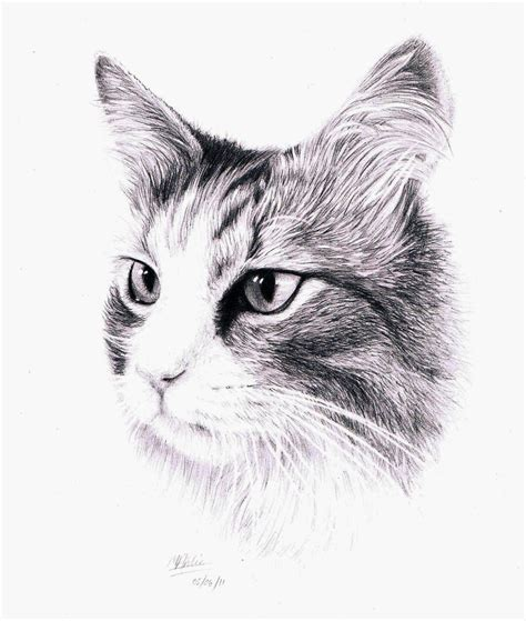 cat and drawing 19 cat drawings ideas sketches design trends premium psd vector downloads