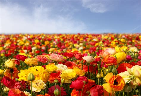 fast growing flowers to put in your garden bruzzese home improvements