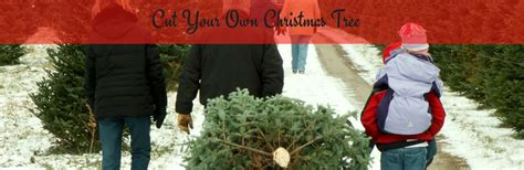 cut your own christmas tree near milford ct
