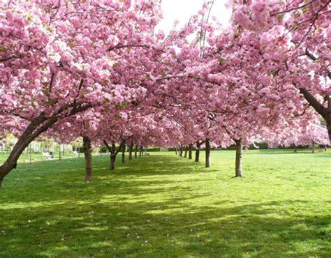 foto pemandangan  taman  calendar template site