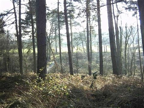 forestry commission s plan for 67 log cabins at delamere