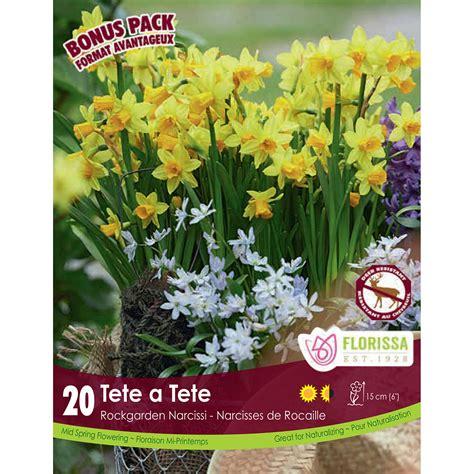 narcissus white petticoat bulbs daffodil bulbs arts