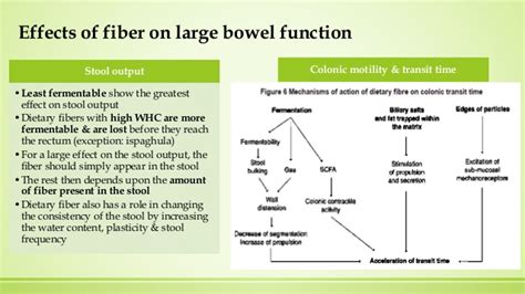 Effects Of Fiber On Stool by Dietary Fiber