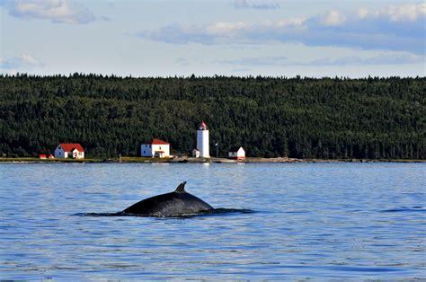 croisi 232 res et observation des baleines qu 233 bec maritime
