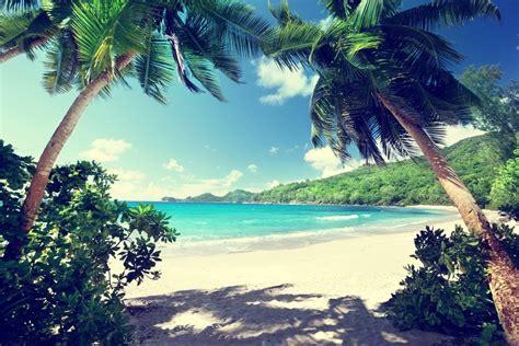 ratgeber garten ratgeber palmen pflegen 183 ratgeber haus garten
