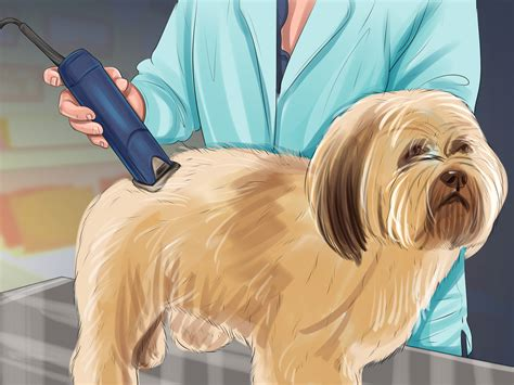 how to puppy cut shih tzu how to puppy cut a shih tzu 11 steps with pictures wikihow