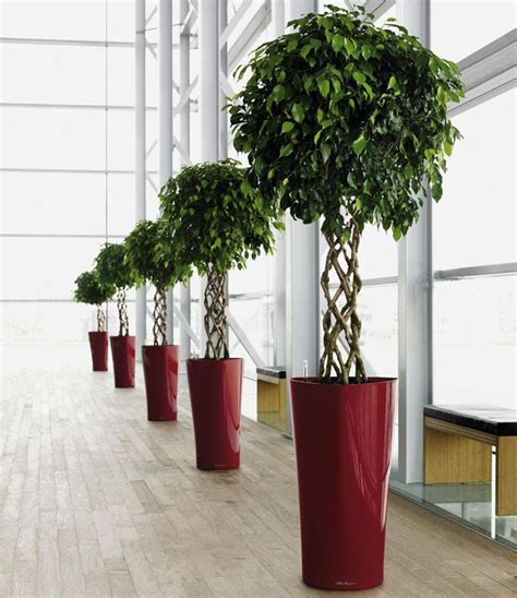 plants for office office plants search office plants
