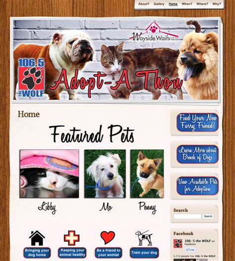 puppy adoption websites pet adoption website design jjj
