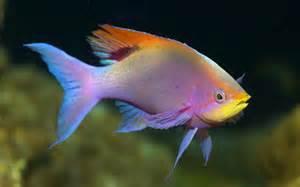 colorful tropical fish colorful fish wallpaper tropical fish underwater sea