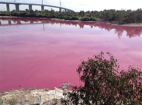 pink lake melbourne 17 best ideas about pink lake australia on pinterest