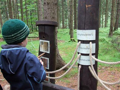 K Fer Im Holz 4552 by Waldhusche Hinterhermsdorf