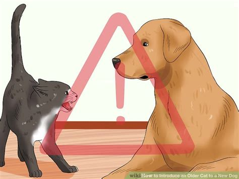 how to introduce a new puppy to a cat how to introduce an cat a new cats kittens