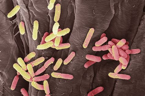 does my a uti uti bacteria use hooks to hang on inside you when you new scientist