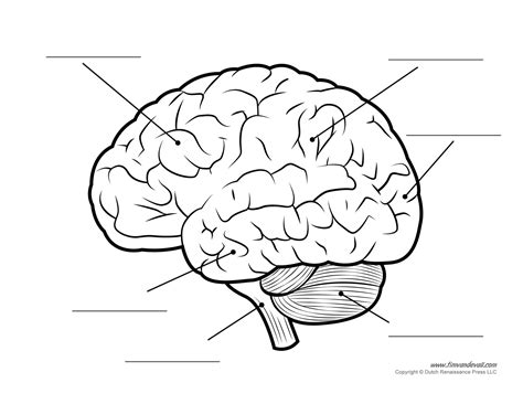 Brain Diagram Unlabeled Bw Tim S Printables Brain Coloring Pages To Print