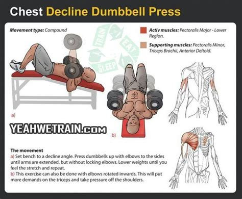 what muscles does decline bench press work 17 best ideas about lower chest workout on pinterest
