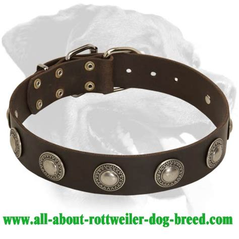 rottweiler leather collars order leather rottweiler walking collar nickel decorations
