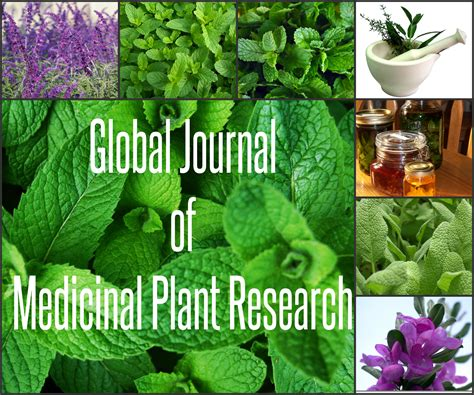 medicinal plants research papers aensi journals