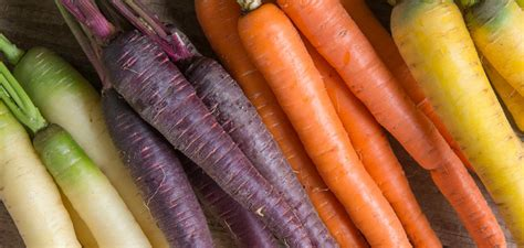 colored carrots multicolor carrots a rainbow of new varieties provide