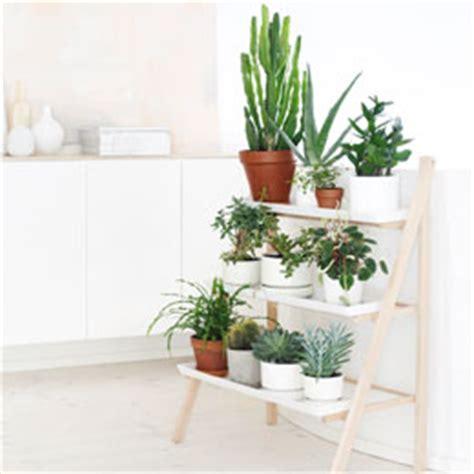zimmerpflanzen die viel sonne vertragen zimmerpflanzen sch 246 ne arten f 252 r jeden standort und