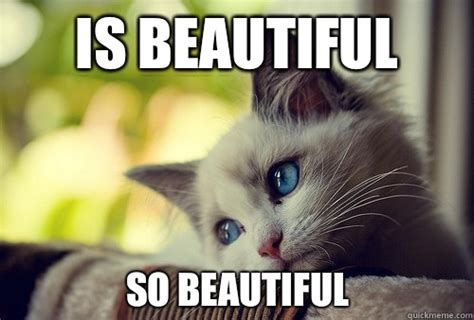 So Beautiful Meme - is beautiful so beautiful first world cat problems