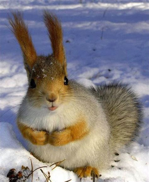 imagenes animales bonitas animales bonitos 4 blogodisea