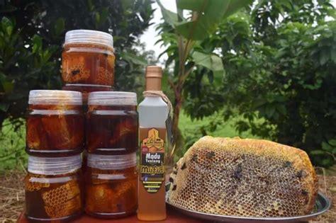 Honeycomb Madu Sarang Asli madu tualang asli original terbaik di malaysia pendekar berkuda