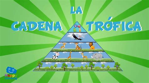 cadena trofica happy learning la cadena tr 243 fica videos educativos para ni 241 os youtube