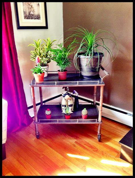 indoor plant garden  antique cart indoor plants