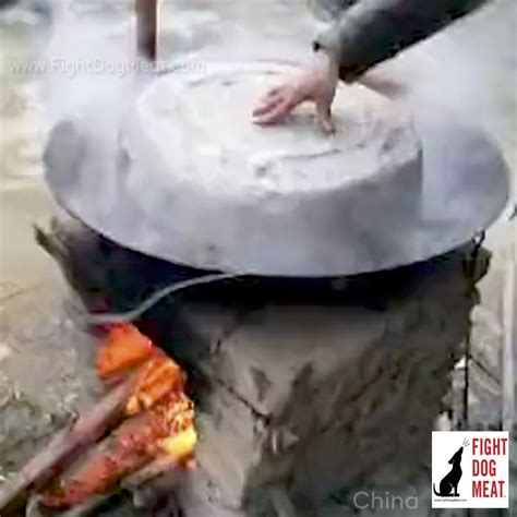 boiled alive china live boiled alive fight
