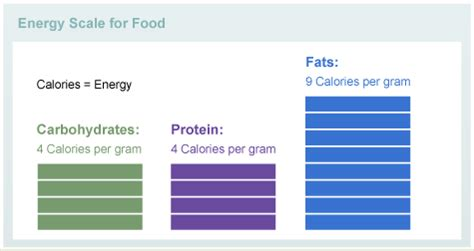 carbohydrates kilocalories per gram understanding food diabetes education