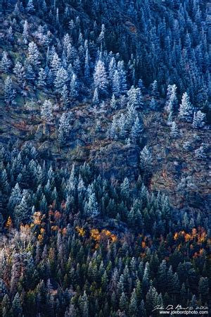walmartcom mountain frost pine quot an early winter dusting quot a dusting of snow and coats the pine trees mountains and forest