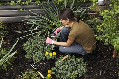 Garden Design With Pruning Plants Knowing How And When To Prune Your Plants