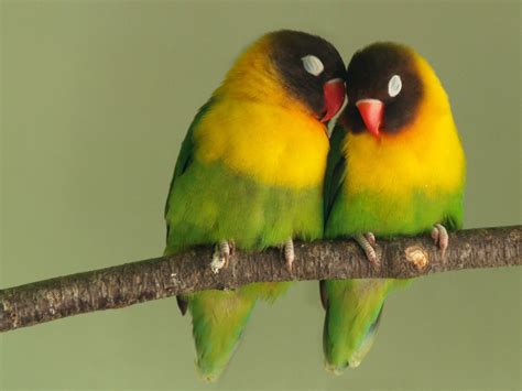 Parrot L by Wallpapers Birds Wallpapers
