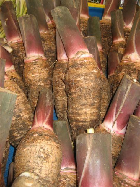 anim agro technology tanaman keladi