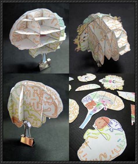 brain crafts for science paper model papercraftsquare free papercraft