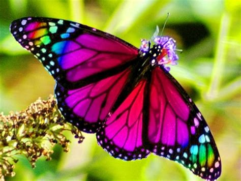 natural korean wallpaper with leaves loves butterfly rainbow butterfly butterflies animals background