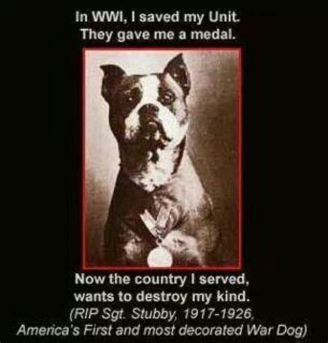 Sergeant Stubby Most Decorated Sgt Stubby It S The Pits