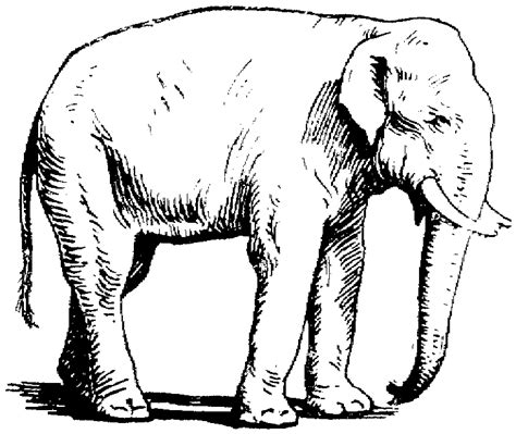 asian elephant coloring page free elephant coloring pages