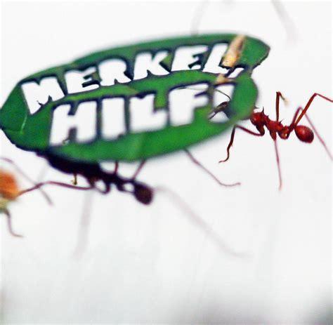 was tun gegen ameisen in der wohnung was tun gegen ameisen was tun gegen ameisen im garten 8