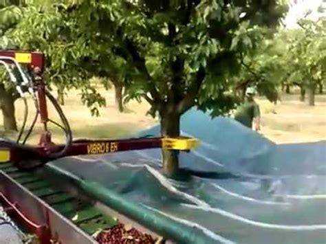 dawson v cherry tree machine how to cherries
