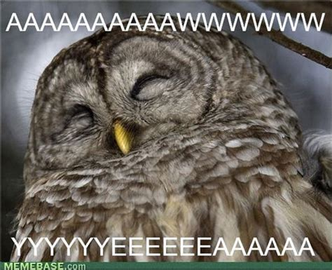 Happy Birthday Owl Meme - image gallery happy owl meme