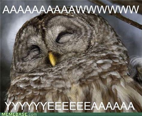 Owl Who Meme - image gallery happy owl meme