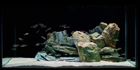Aquascape Tema Batu Lava Rock how to set up and aquascape a cichlid habitat cichlid