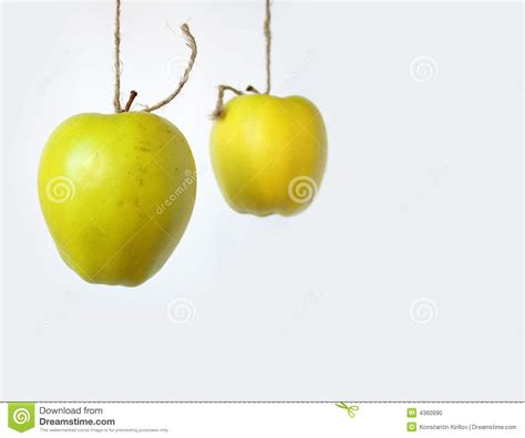 two hanging apples stock photo image 4360990